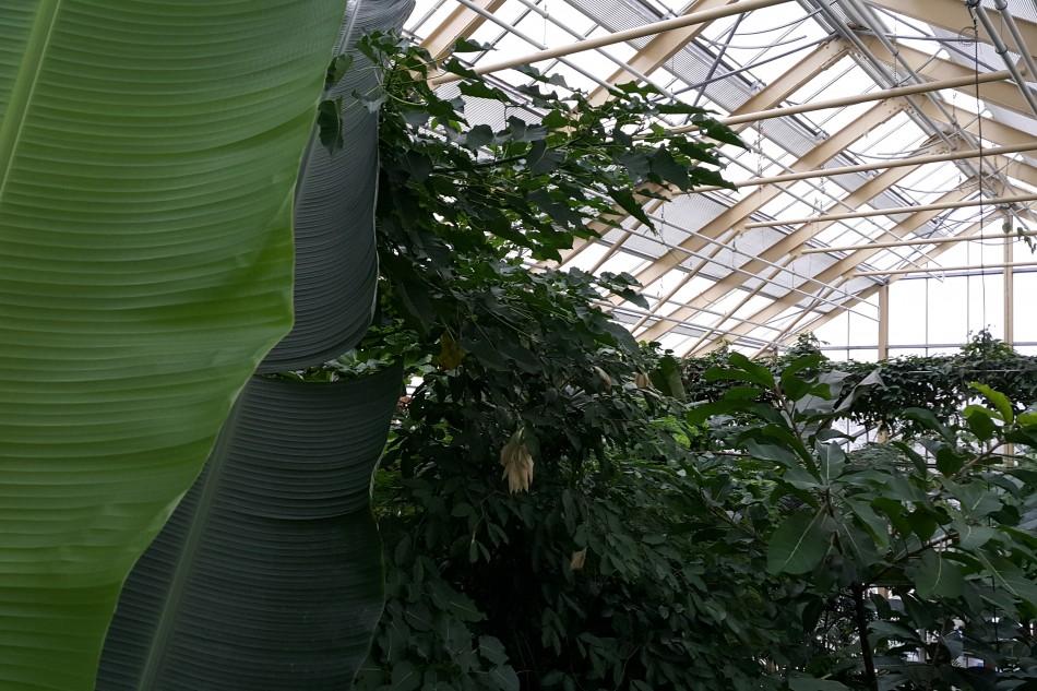 Jejak Indonesia di Kebun Botani Leiden